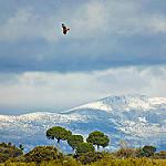 Fotos de Casarrubios del Monte