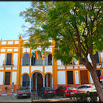 Fotos de Manzanilla