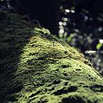 Fotos de Crecente
