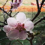 Fotos de Plou