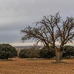 Fotos de Portillo de Soria
