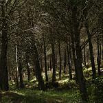 Fotos de Valverde del Camino