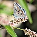 Fotos de Pina de Ebro