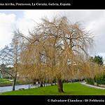 Fotos de Ponteceso