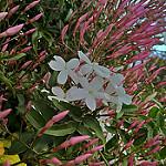 Fotos de La Palma del Condado