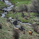 Fotos de Navarredonda y San Mamés