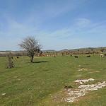 Fotos de Junta de Villalba de Losa