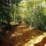 Fotos de La Rinconada de la Sierra