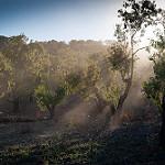 Fotos de Almonacid de La Sierra