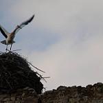 Fotos de Quintana del Marco