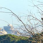 Fotos de Curiel de Duero