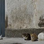 Fotos de Suflí