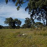 Fotos de Aldea del Fresno