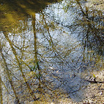 Fotos de Riudellots de la Selva