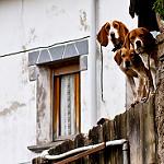 Fotos de Garaioa
