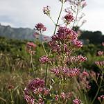 Fotos de Vall de Gallinera
