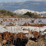 Fotos de Gaianes