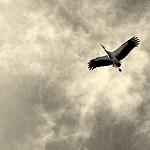 Fotos de Madrigal de las Altas Torres