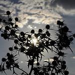 Fotos de Rueda de la Sierra