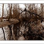 Fotos de Villabuena del Puente