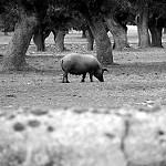 Fotos de Frades de la Sierra