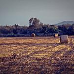 Fotos de Santa Margalida