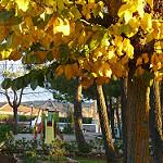 Fotos de Peñascosa