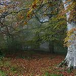 Fotos de Auritz - Burguete