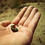 Fotos de Hoyo de Manzanares
