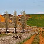 Fotos de Bercianos del Real Camino