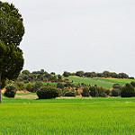 Fotos de Sisamón
