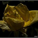 Fotos de Cihuri