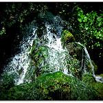 Fotos de El Bosque