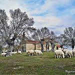 Fotos de Pereña de la Ribera