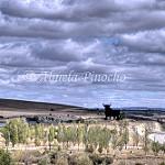Fotos de Algora